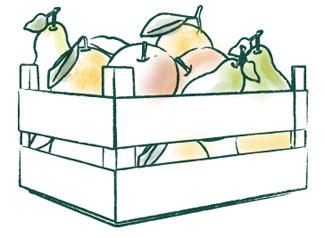 Obst-Abonnement für Münsteraner Firmen, Schulen, Kindergärten